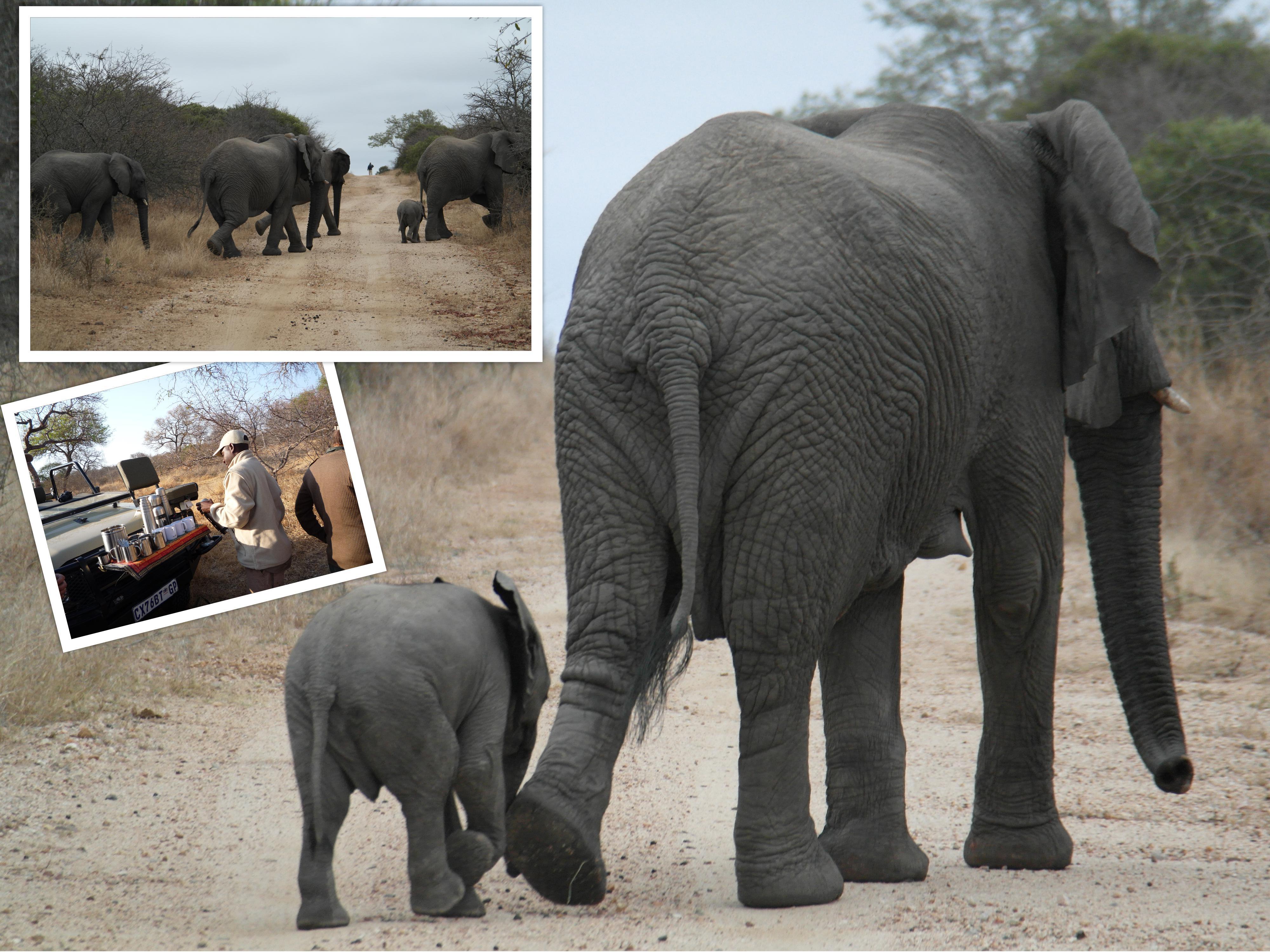 Lang gezocht, maar gevonden. Deze prachtige groep olifanten.