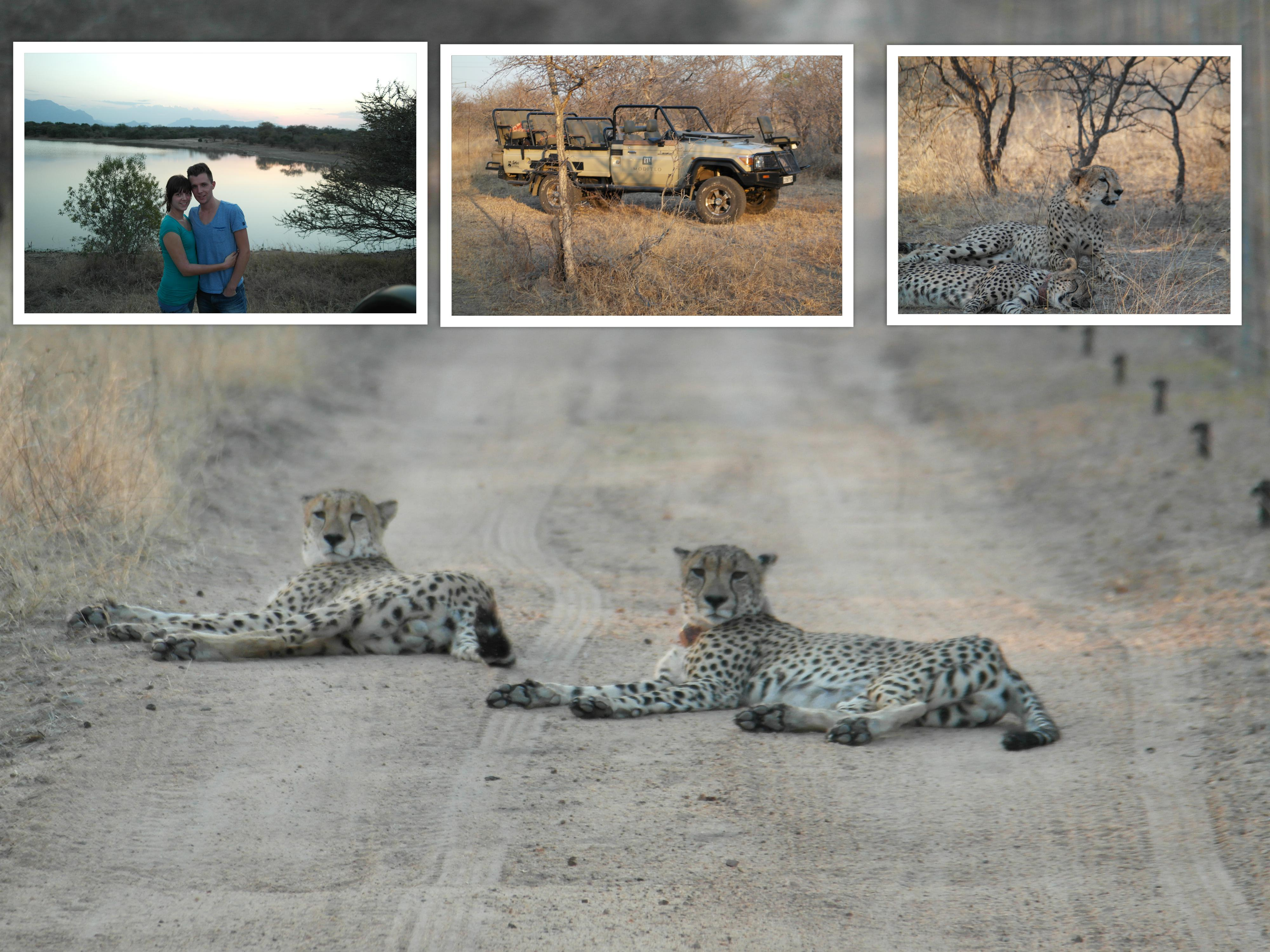 Cheeta's! We zijn zelfs de auto uitgestapt met een ranger om vervolgens achter ze aan te lopen. Hard bonkte in mijn keel, maar het was zooooo vet! Dit waren overigens twee mannetjes.
