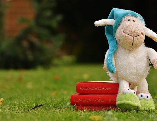 sheep-1596376_1920-1